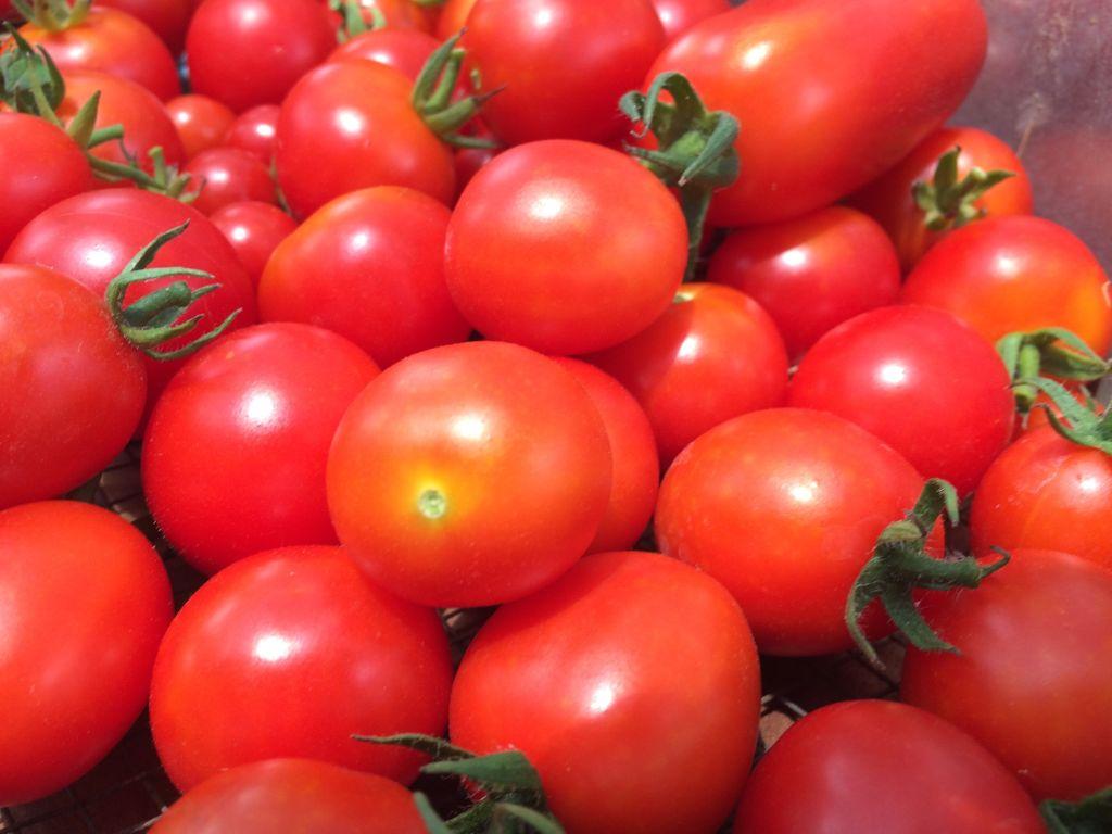 宝石のようなトマトたち。