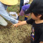 畑の教室で、人参の種まきとぶどうの収穫(2015/08/16)