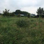 茨城県で自然農を始めます!(2015/09/06)