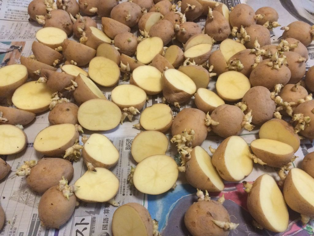 種芋用のデジマ