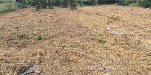 草をかられた畑