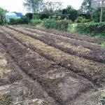 今日も畝作り(2015/09/17)