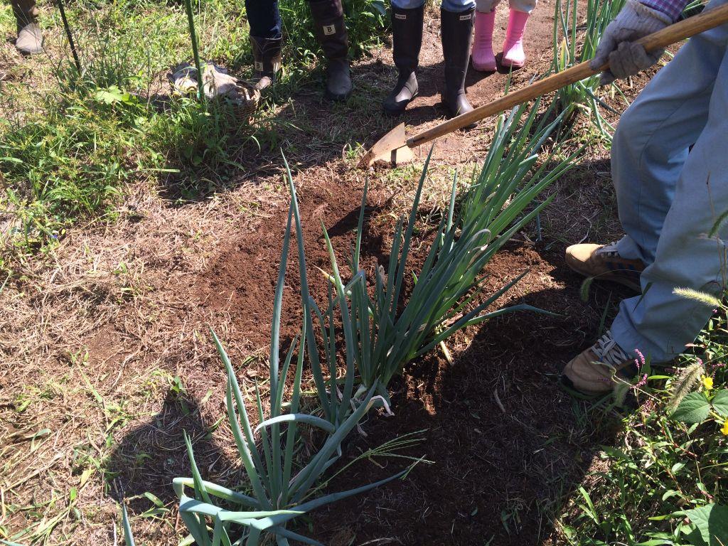 草刈りをして三角ほうという道具で土を寄せます。