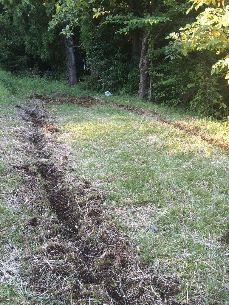 午後はこちらを耕しました。