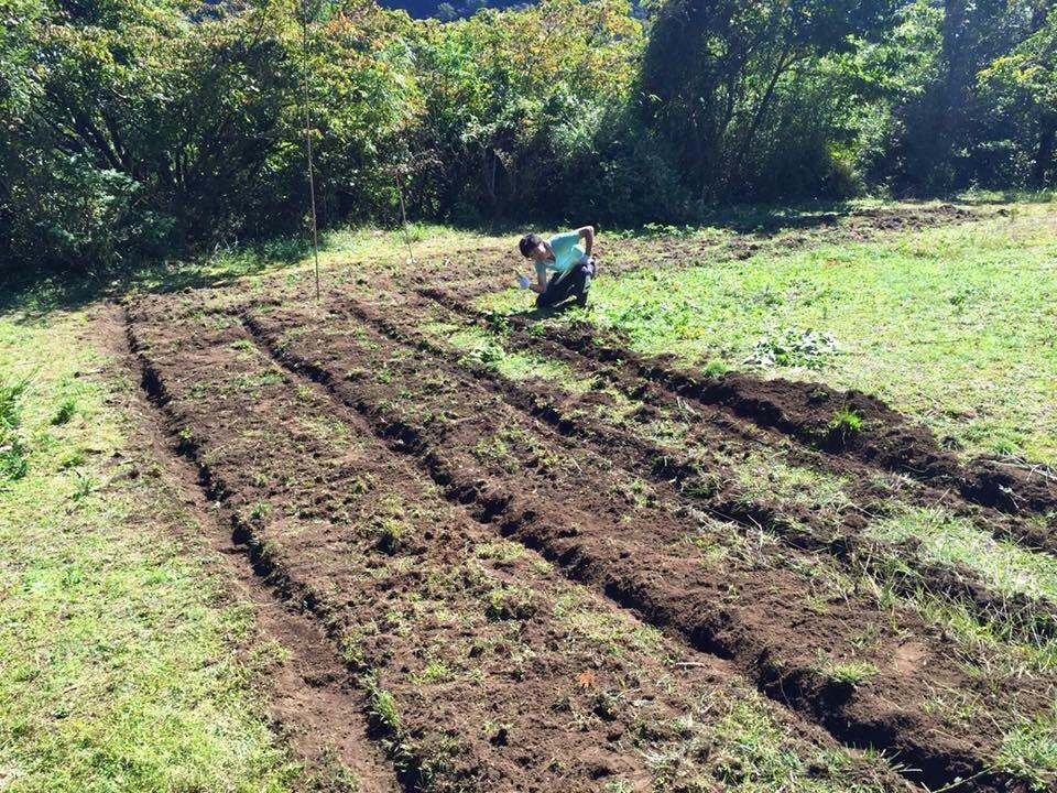 今回作った畝