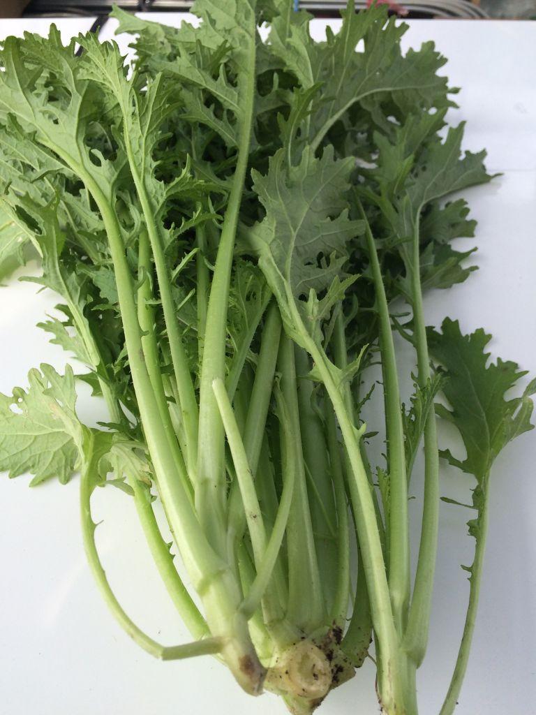 収穫した謎の野菜