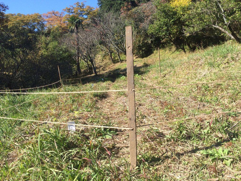 自然農エリア(下)の柵