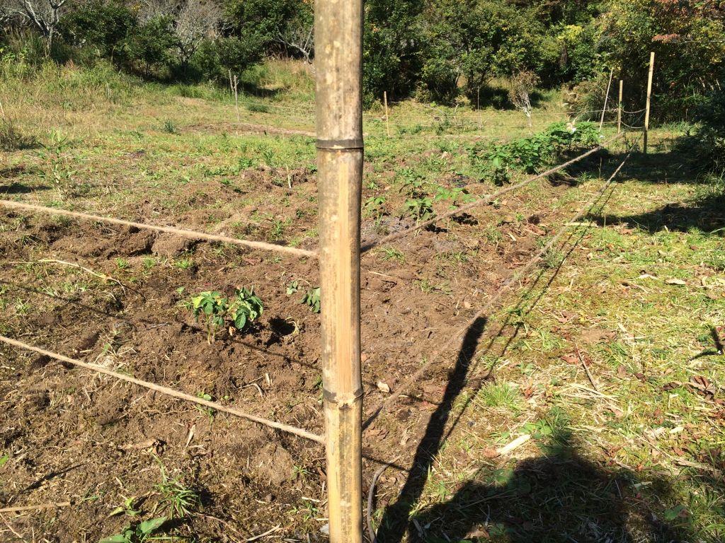 自然農エリア(上)の柵