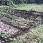 ハコネエコビレッジで農作業(施肥、畝立てなど)(2015/11/17)