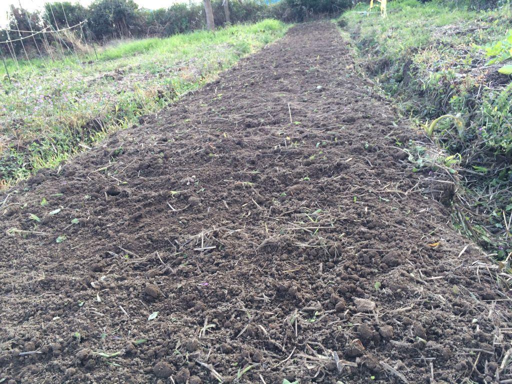 玉ねぎの定植のために表土を剥いだところ