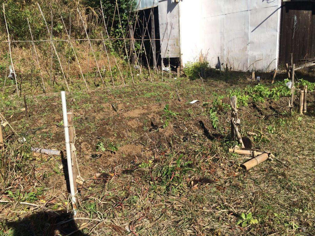 麻縄で作った囲いは、ことごとく縄を切られてしまいました。