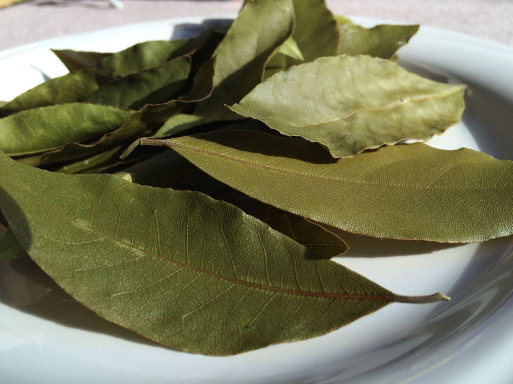 ネットから出してみたローリエの葉