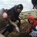 【自然農の畑で、山ね家のみなさんと芋掘り】(2015/12/27)