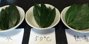 3種類の月桂樹の葉