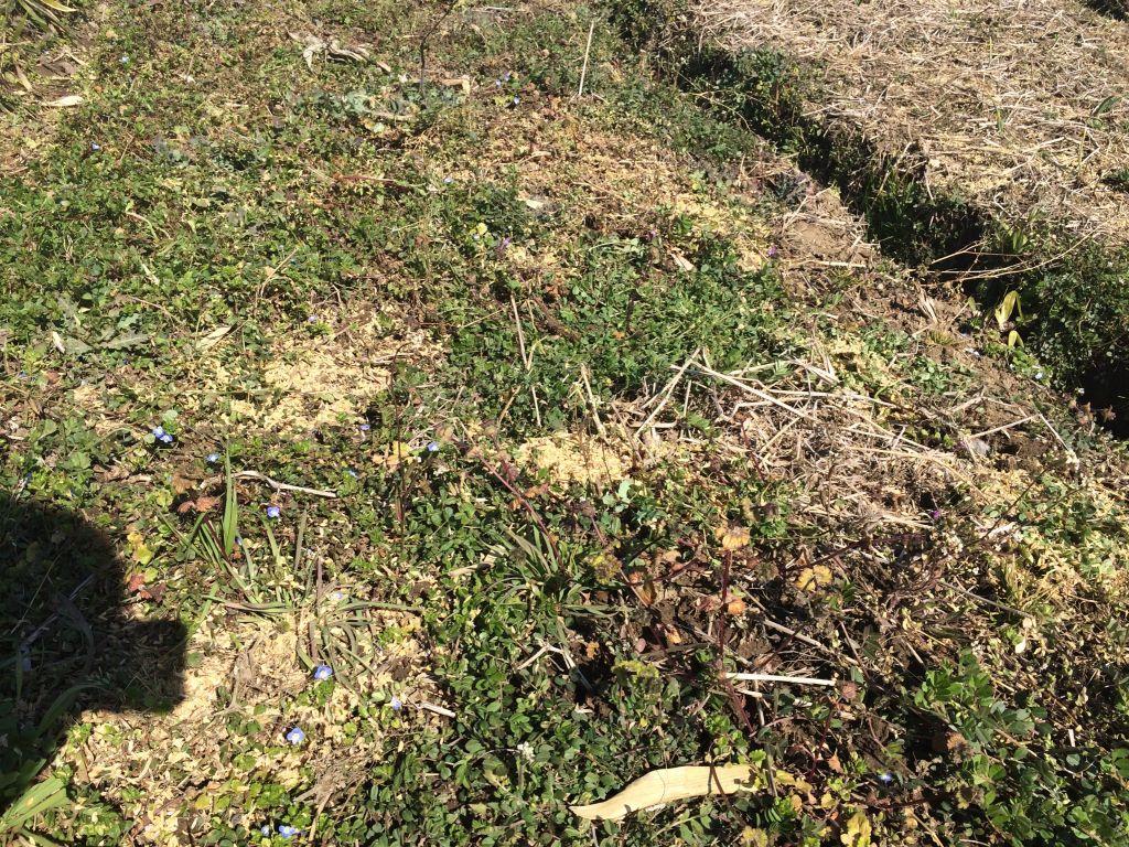 草を被せたところ