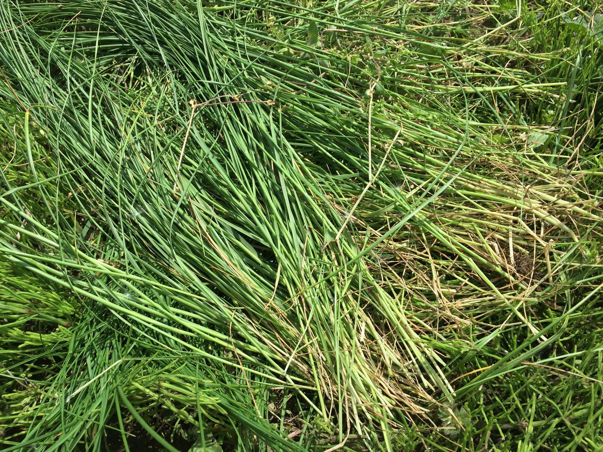 土と草を被せたところ