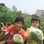 【家族でスナップエンドウとツタンカーメンエンドウの収穫】(2016/05/02)
