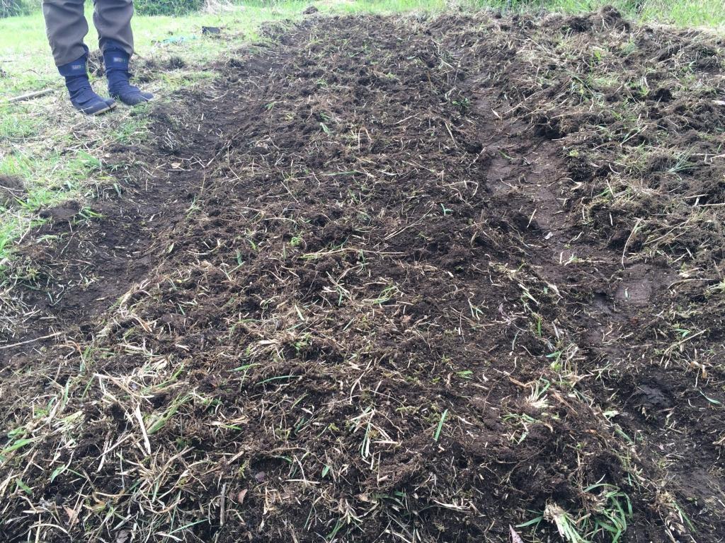 耕した畝に種を降ろしたところ