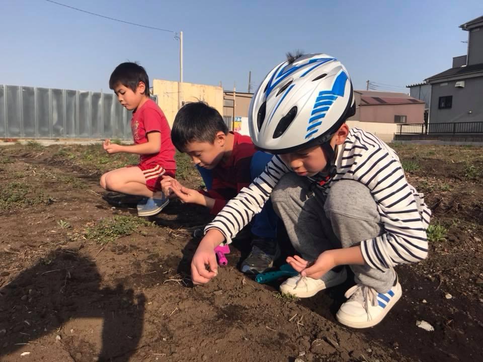 子どもたちが人参の種を降ろしているところ