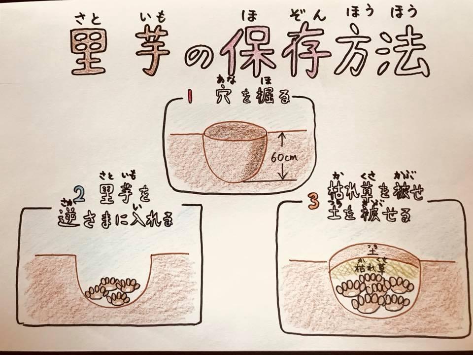 里芋の保存方法