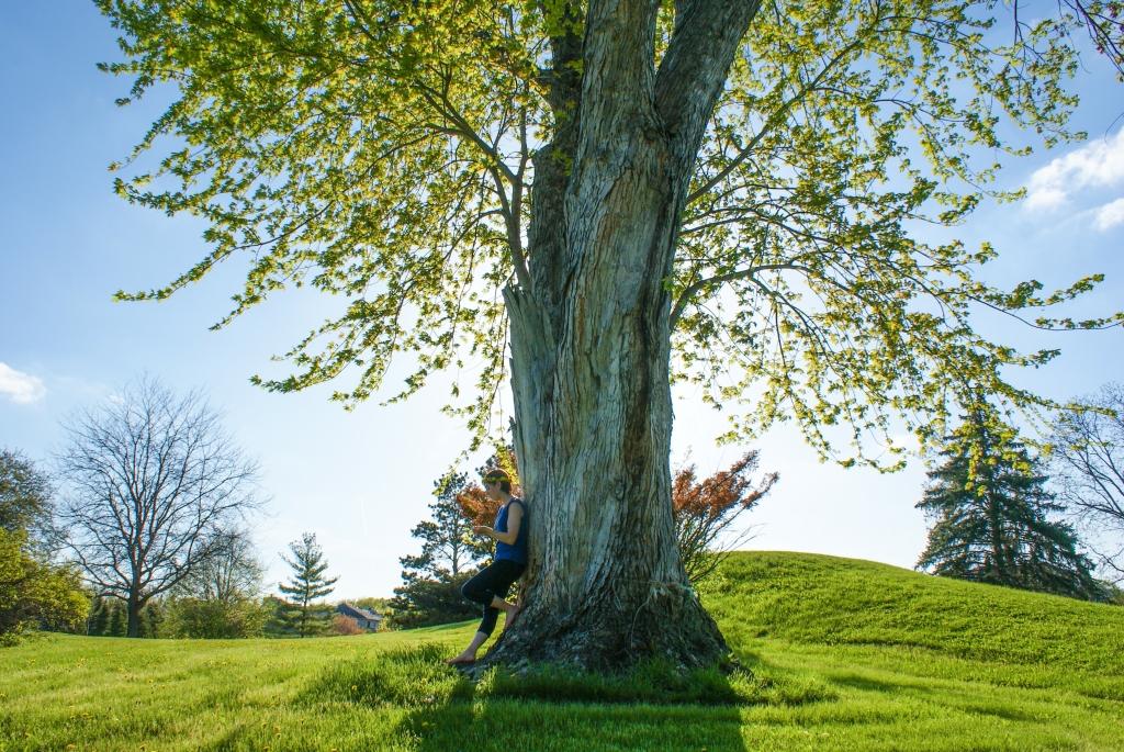 自立する木