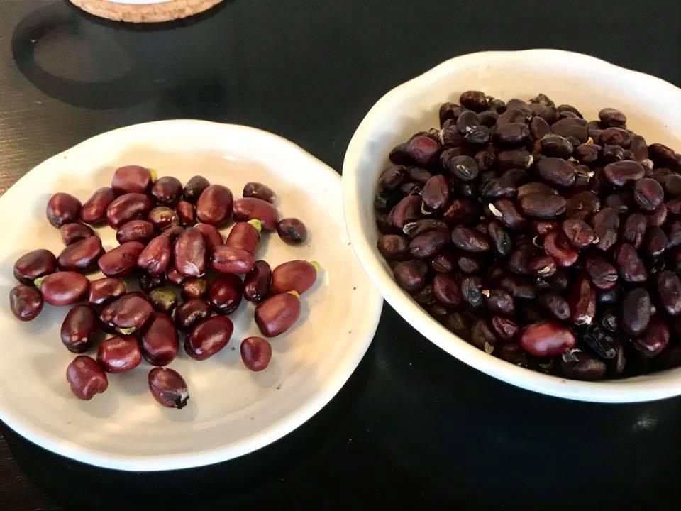 赤そら豆さんを鞘から取り出したところ。左側は鞘が緑だったもので、豆の色も明るいですね。