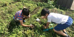 大豆の種を降ろす子どもたち
