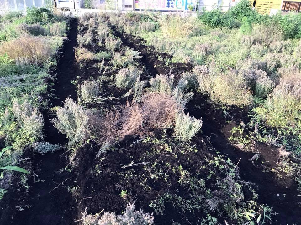 きゅうり用に作成した畝