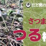 【2度めのつる植え!さつまいも】(2018/08/24)
