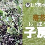 【動画で紹介!落花生の子房柄】(2018/08/14)