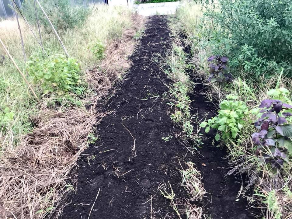 草を剥いで、畝を作ったところ。
