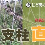 【台風直撃!支柱修復】(2018/09/06)