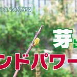 【ハンドパワーの効果か!?月桂樹と朝倉山椒】(2018/10/15)