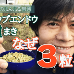 【なぜ3粒ずつ?種まき】(2018/11/03)