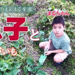 【秋植えだけど芋できた?息子とじゃがいもホリホリ】(2018/12/08)