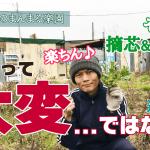 【農業って大変…ではない!(道具編) そら豆の摘芯をしながら】(2018/12/22)