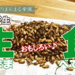 【生のまま食べてみる!採れたて落花生】(2018/11/30)