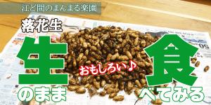 サムネイル-落花生生食