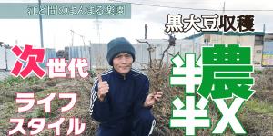 サムネイル-黒大豆収穫