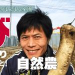【びっくりしたこと!大根を収穫しながら・・・】(2019/02/07)