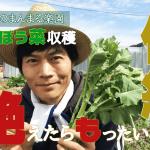 【作る人がいなくなると途絶える…伝統野菜:のらぼう菜を収穫しながら】(2019/03/19)