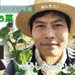 【虫はどうしたらいいの?のらぼう菜を収穫しながら・・・】(2019/03/22)