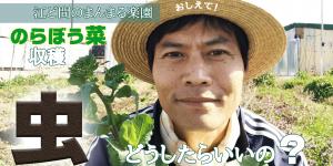 サムネイル-のらぼう菜収穫