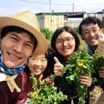 【農園体験】どこから折ればいいの?のらぼう菜(2019/03/31)