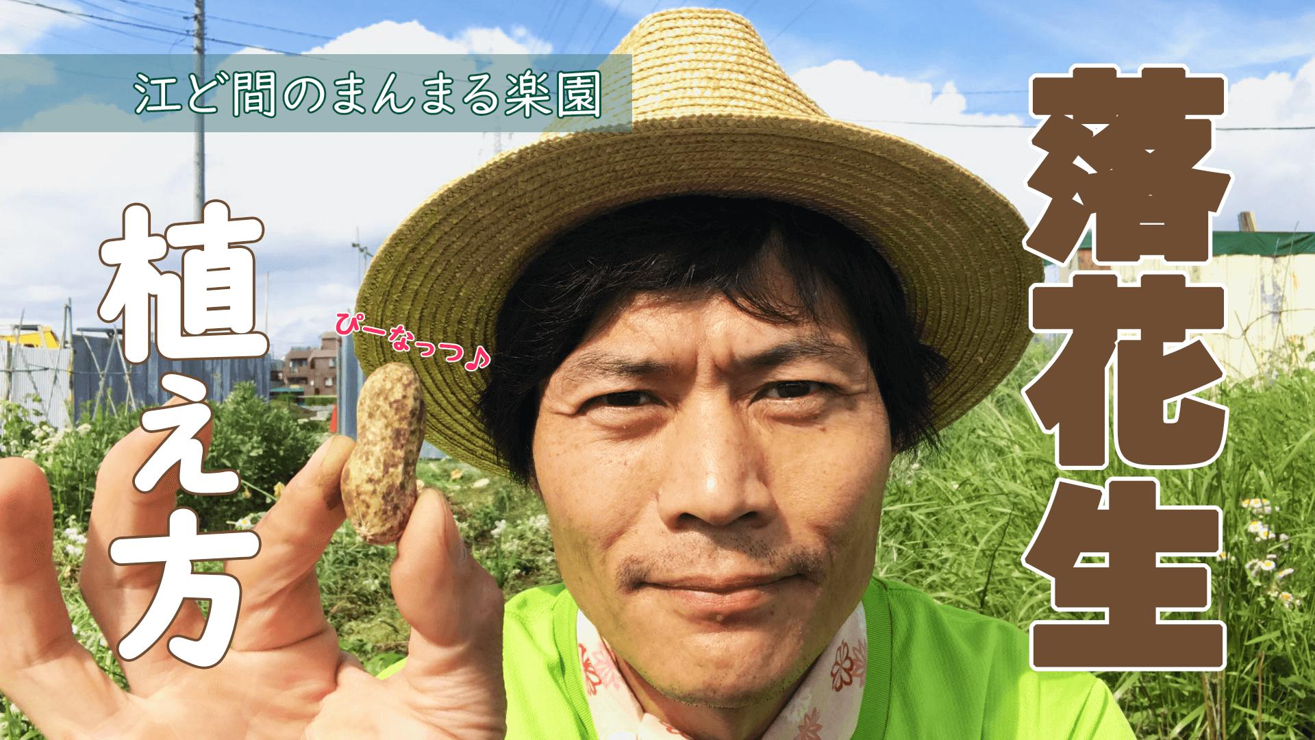 サムネイル-落花生の種降ろし