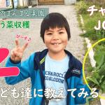 【子供にもできるのか?のらぼう菜の収穫】(2019/04/12)