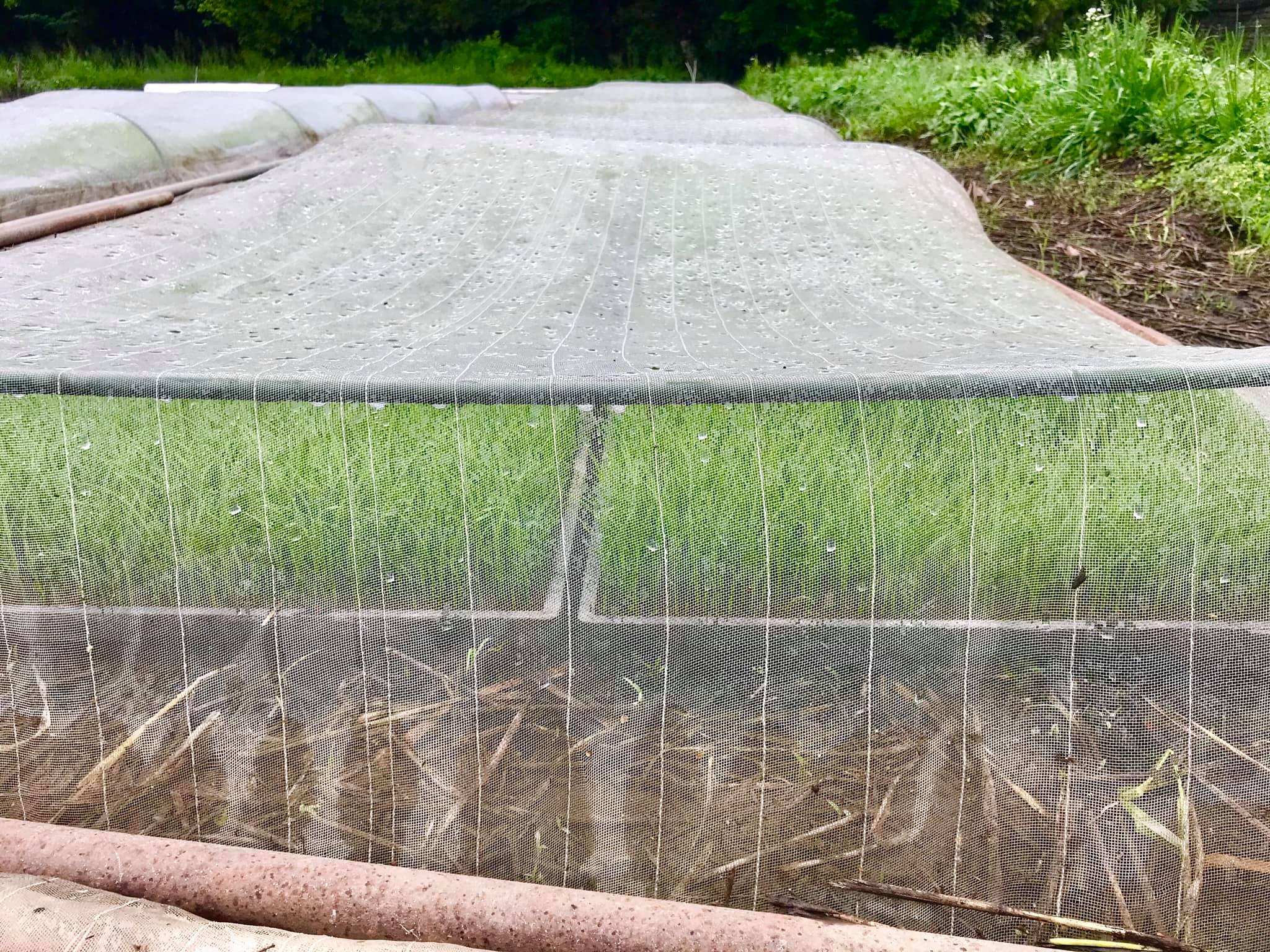 苗床のアップ