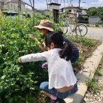【自由研究・親子体験!自然農園で生き物と触れ合おう】