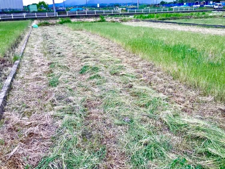 草刈り中の田んぼ