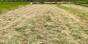 あと1列というところまで草を刈ったところ